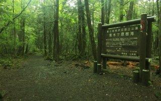 Аокигахара Дзюкай, Япония. Aokigahara Forest, Japan