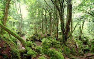 Пазлвуд, Лес Дин. Forest of Dean, Puzzlewood