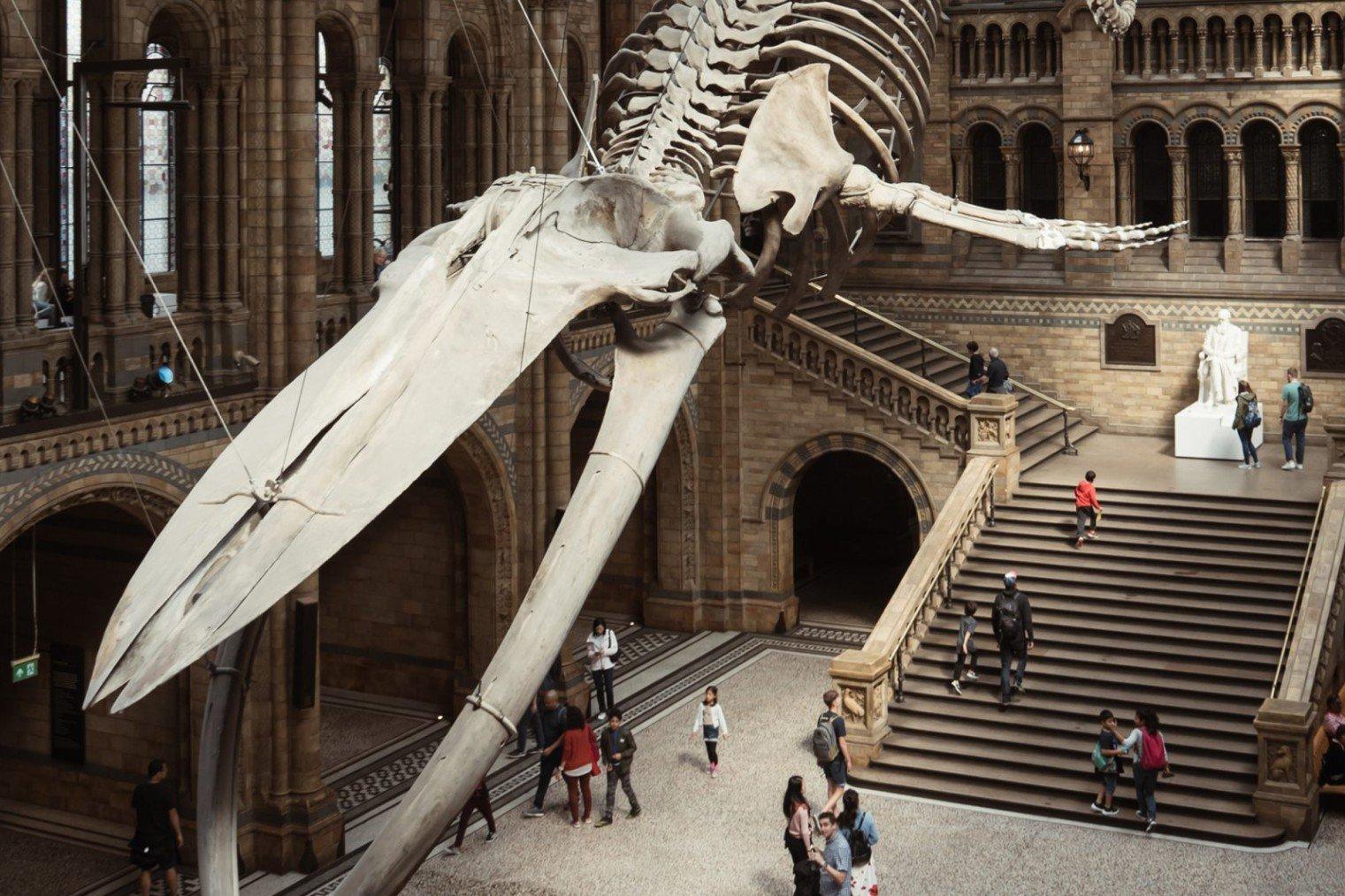 Музей естествознания, Лондон. Туризм, информация о музее