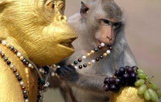 Monkey Buffet Festival, Lopburi, Thailand