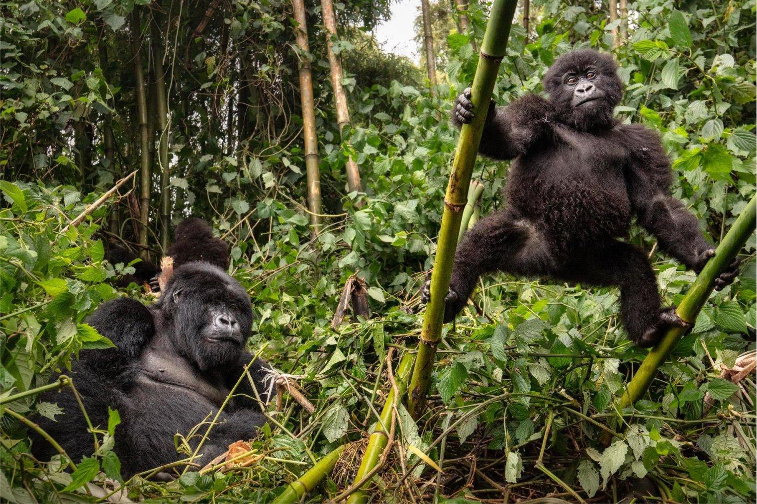 Congo Democratic Republic
