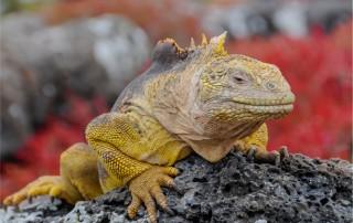 Galapagos Islands. Travel. Галапагосские острова. Туризм