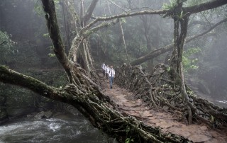 Live Bridges of Meghalaya. Travel. Живые мосты Мегхалая