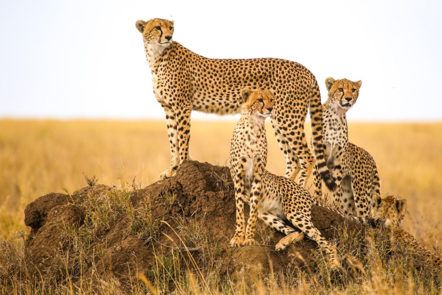 Serengeti, Tanzania. Travel. Серенгети. Туризм